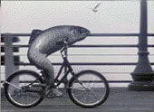 http://www.phrases.org.uk/images/fish-bicycle.jpg