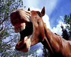 Dont look a gift horse in the mouth the meaning and origin of dont look a gift horse in the mouth negle Images