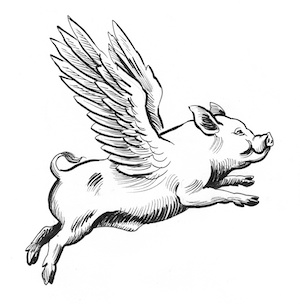 Pigs Might Fly When Pigs Fly The Meaning And Origin Of This Phrase